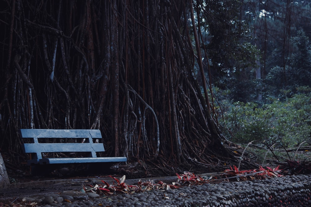 gray wooden swing bench beside tree roots at daytime