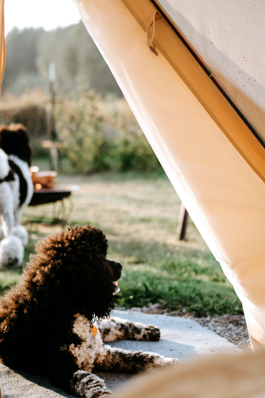 long-coated dog lying near grass outdoors