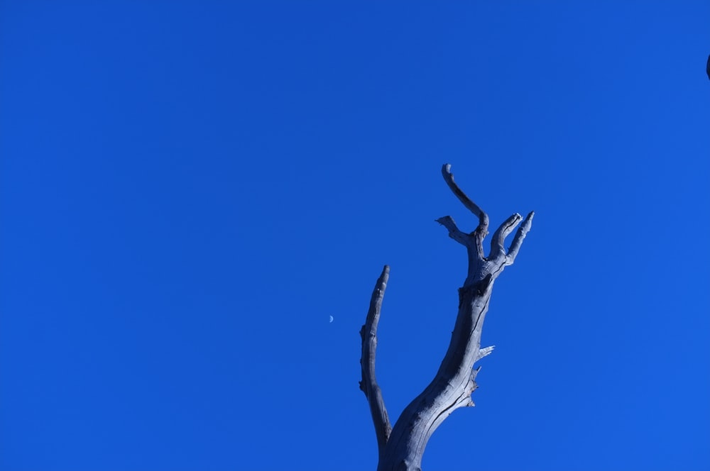 worm's eye view photography of bare tree