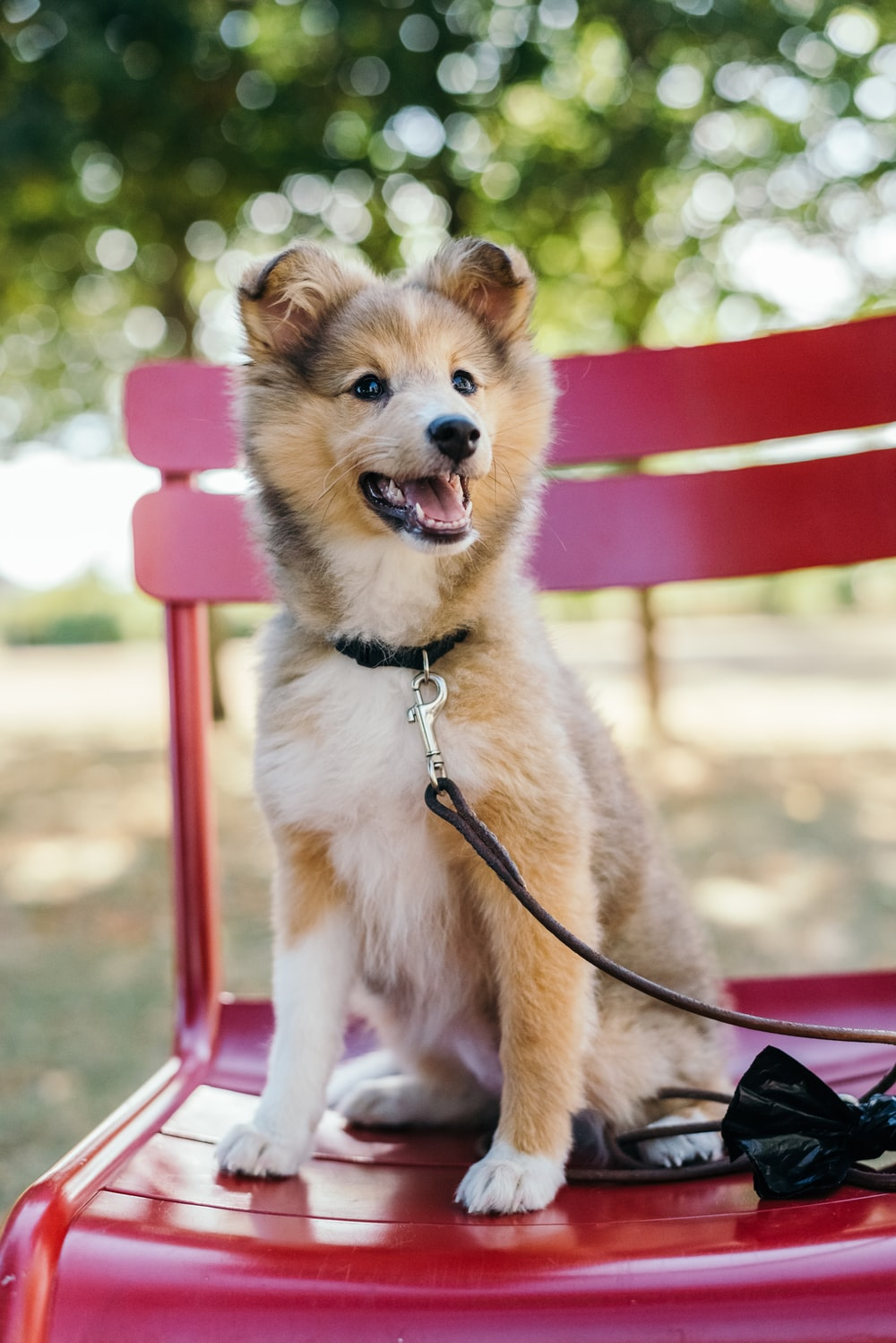 medium-coated tan and white puppy sitting on red metal bench at daytime