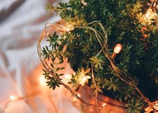 tilt shift photography of orange string lights on green plant