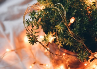 tilt shift photography of orange string lights on green plant