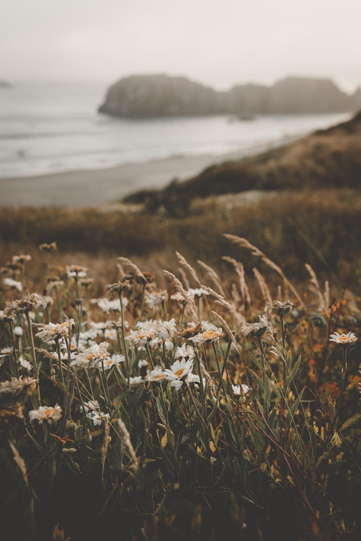 white petaled flowers in field