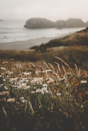 4790. Virágok