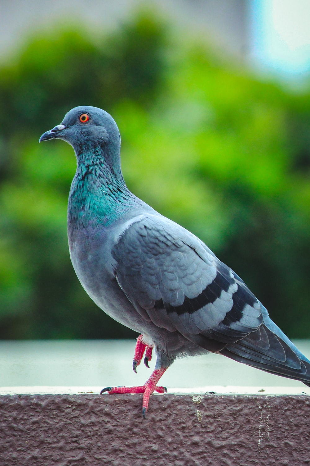 shallow focus photography of pigeon
