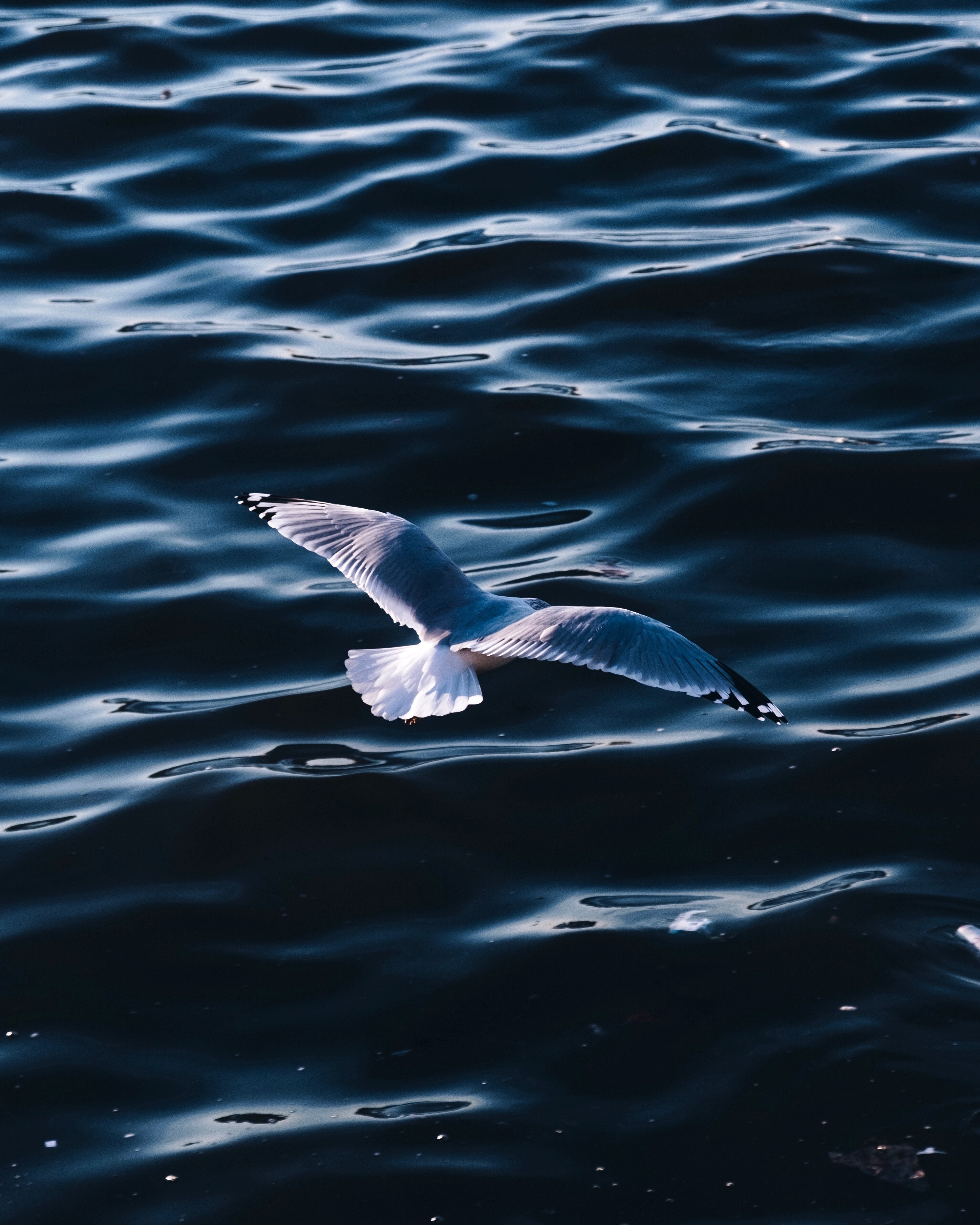 white seagull over body of water during daytime