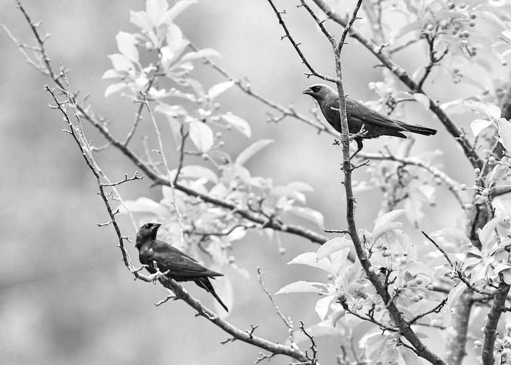 birds perching on tree branch