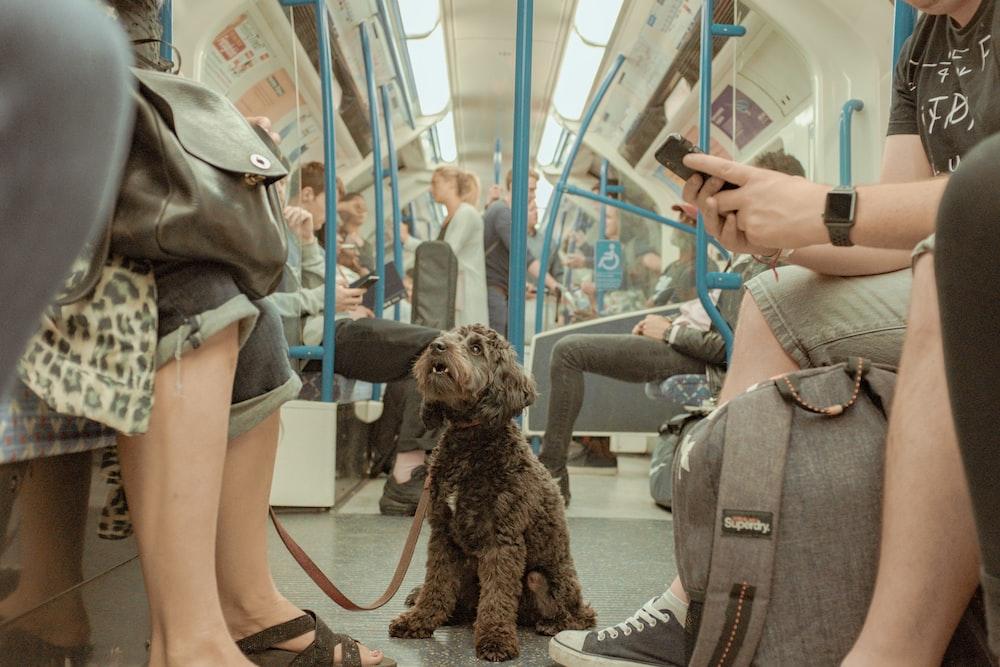 short-coated brown dog inside train
