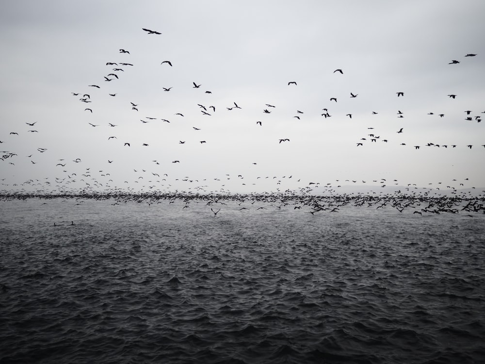 flock of birds lying above body of water