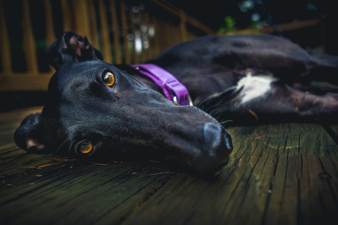 Retired racer doing what she does best.