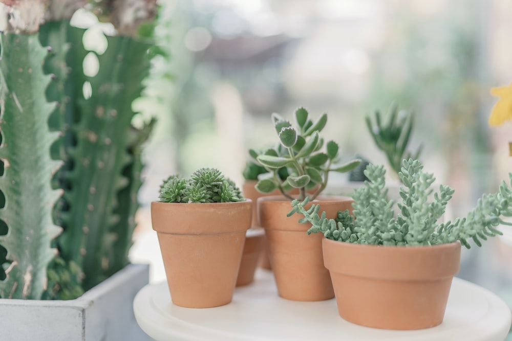 green succulent plants on brown clay pots