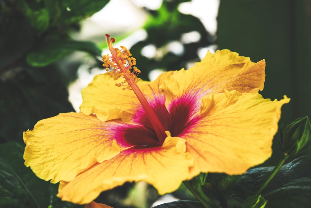 Pink lilly pictures download free images on unsplash yellow and pink flower mightylinksfo