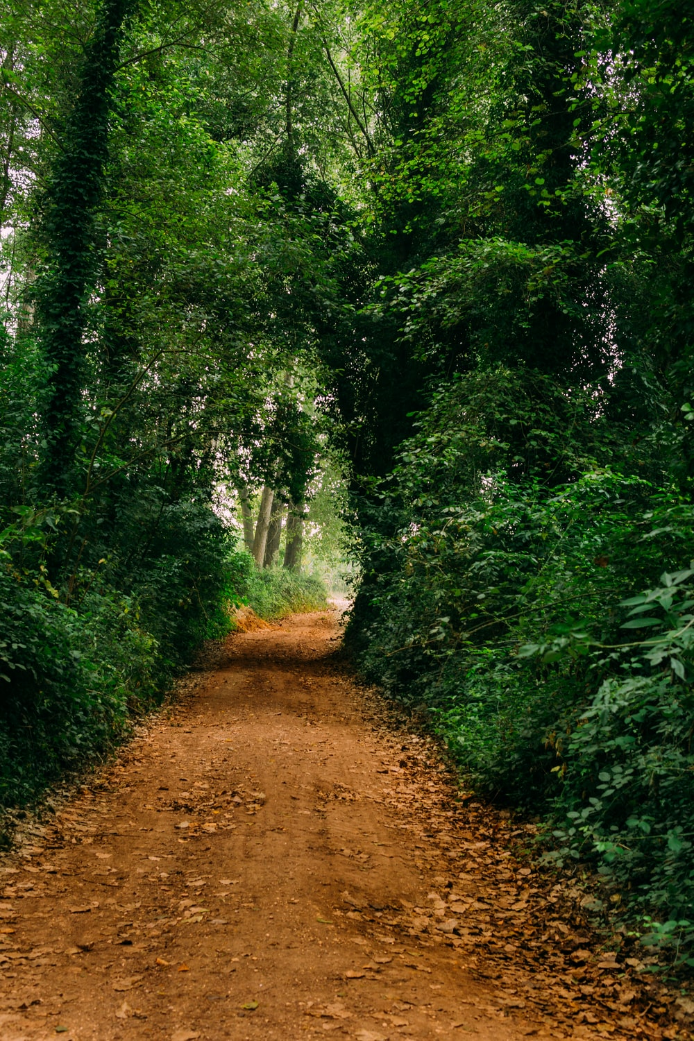dirt road surrounded with trees