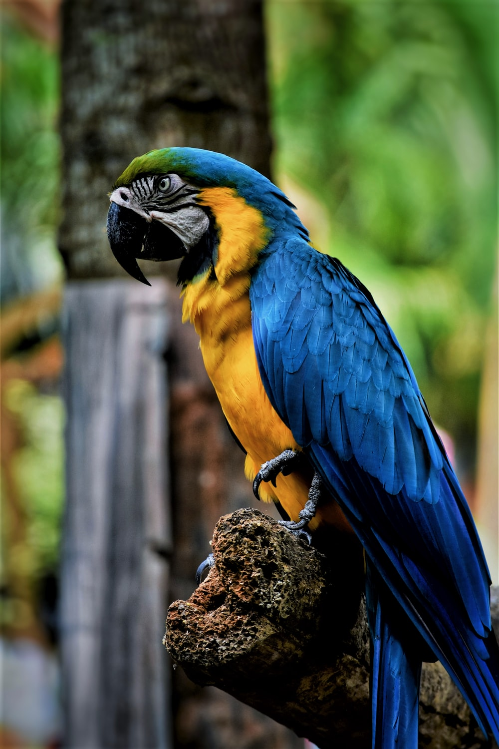 blue and yellow macaw perching on tree branch