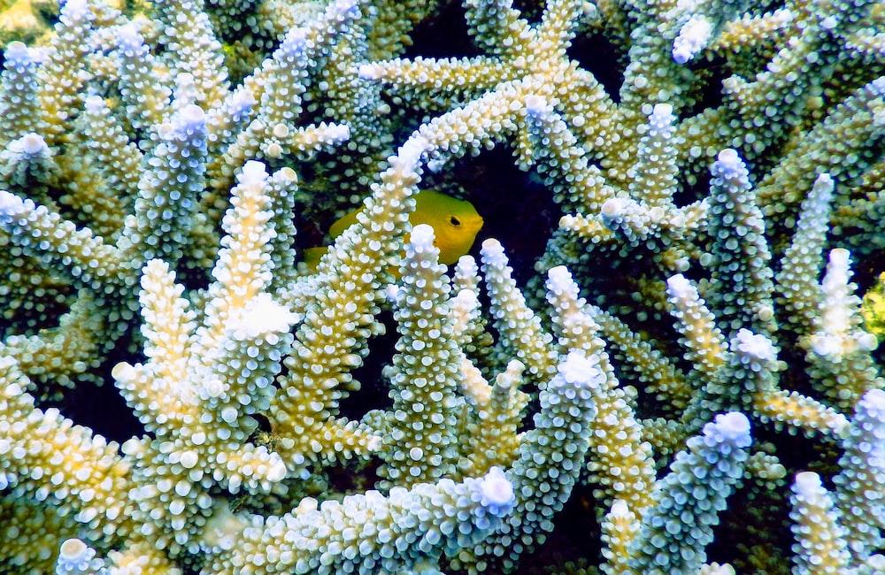 yellow pet fish