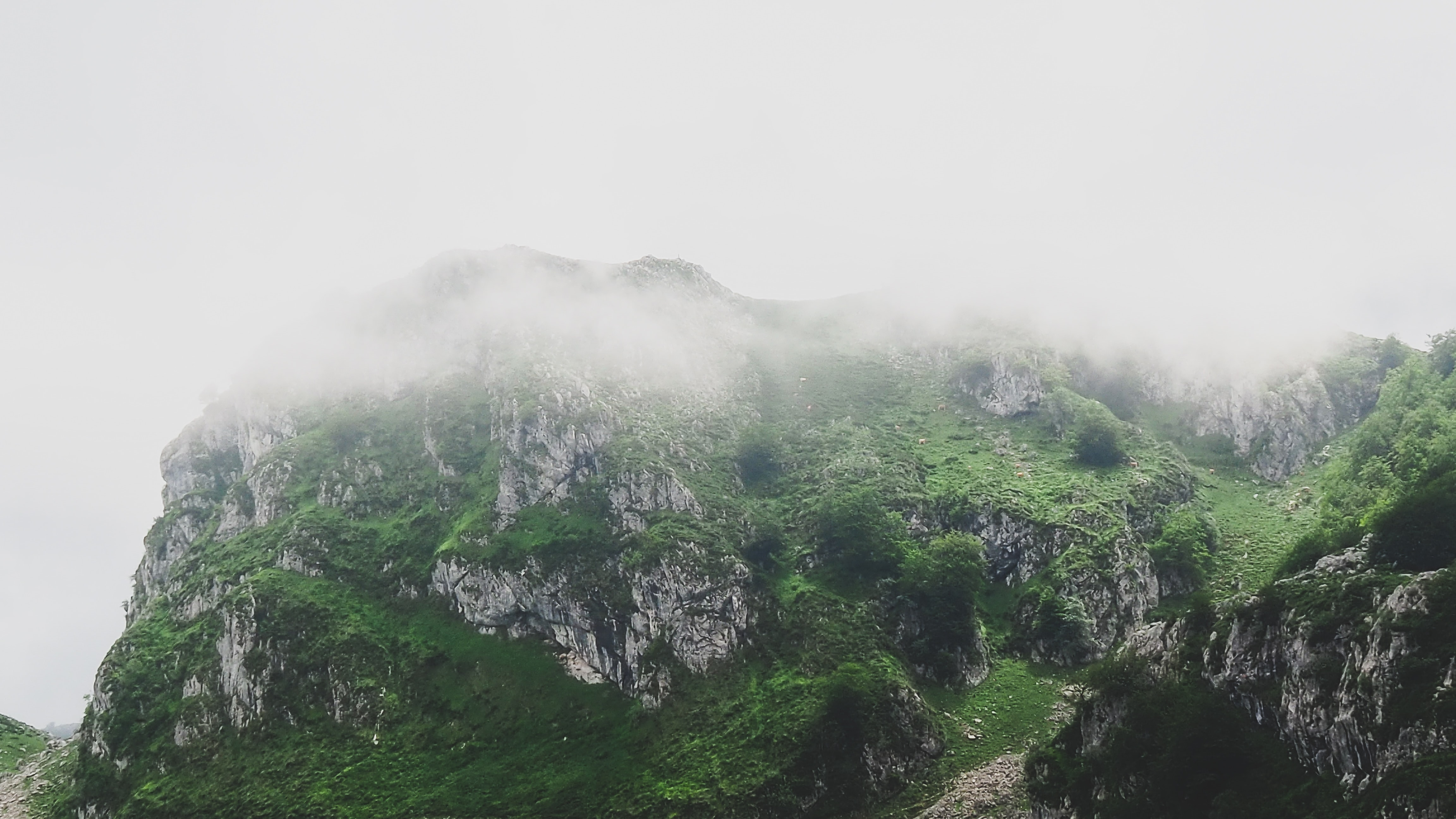 mountain covering with fog