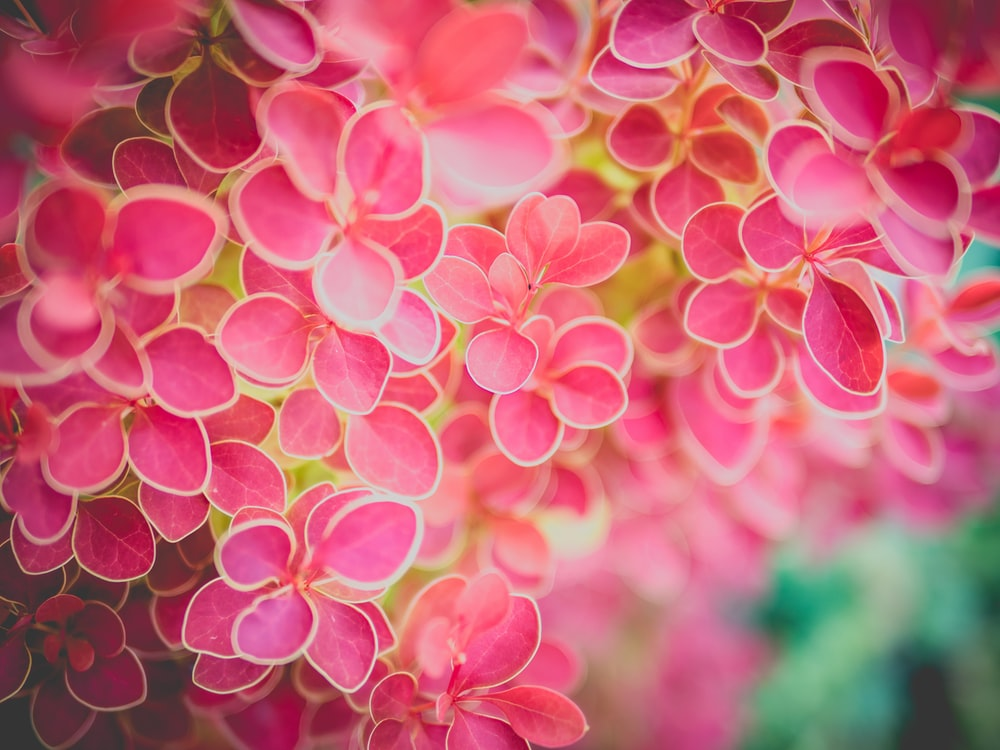 Pink flowers pictures hd download free images on unsplash pink and yellow flowers mightylinksfo