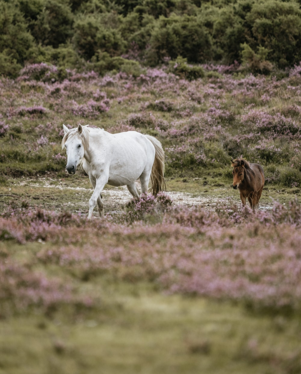 white horse and brown pony walking on grass field