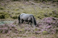 gray horse on flower field