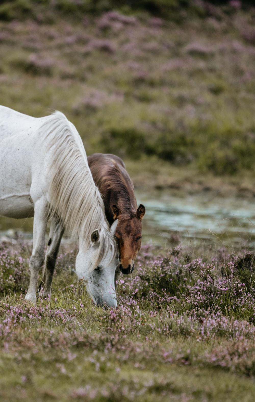 white horse standing near brown horse feeding on grass