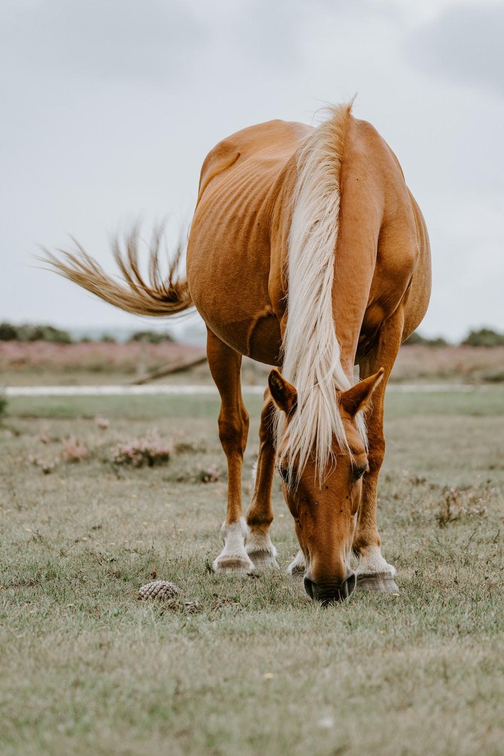 orange and white horse on grass