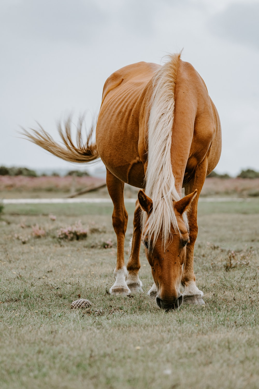 Best 20+ Horse Pictures [HQ] | Download Free Images on Unsplash