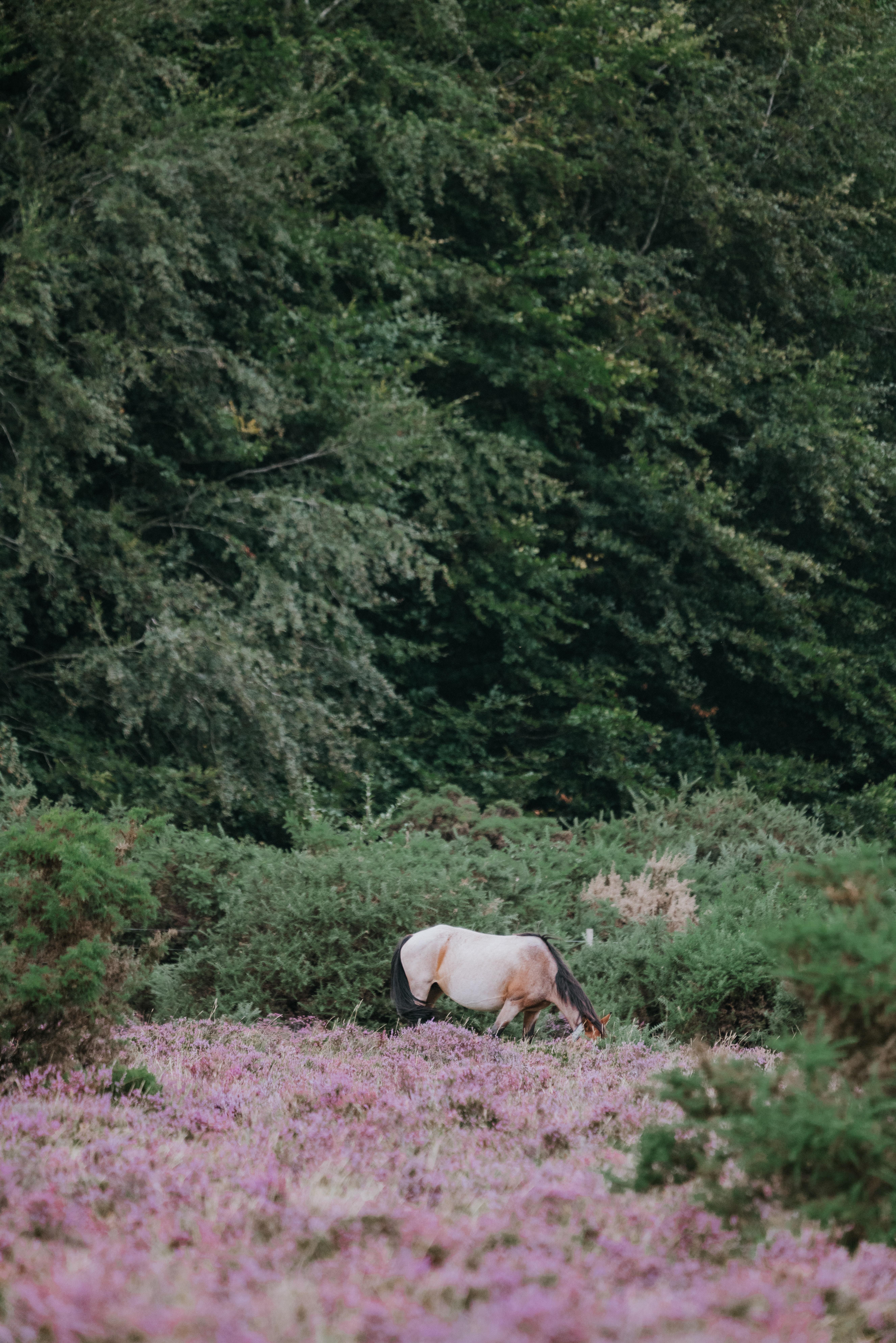 beige horse standing on grass field