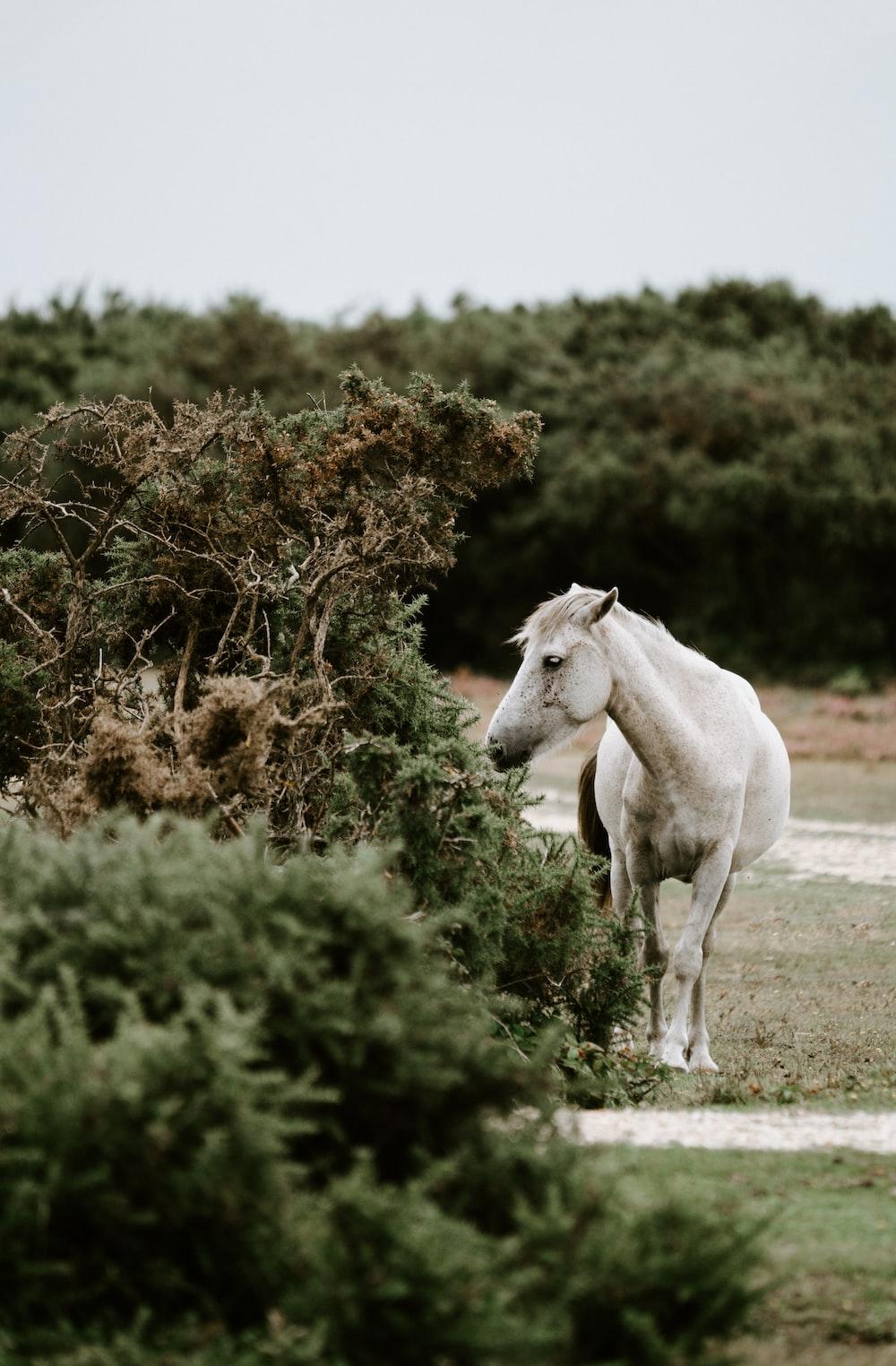 horse standing beside tree