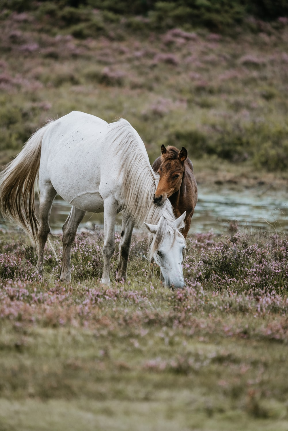 white and brown horse near river