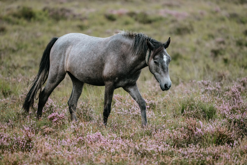 gray horse on field