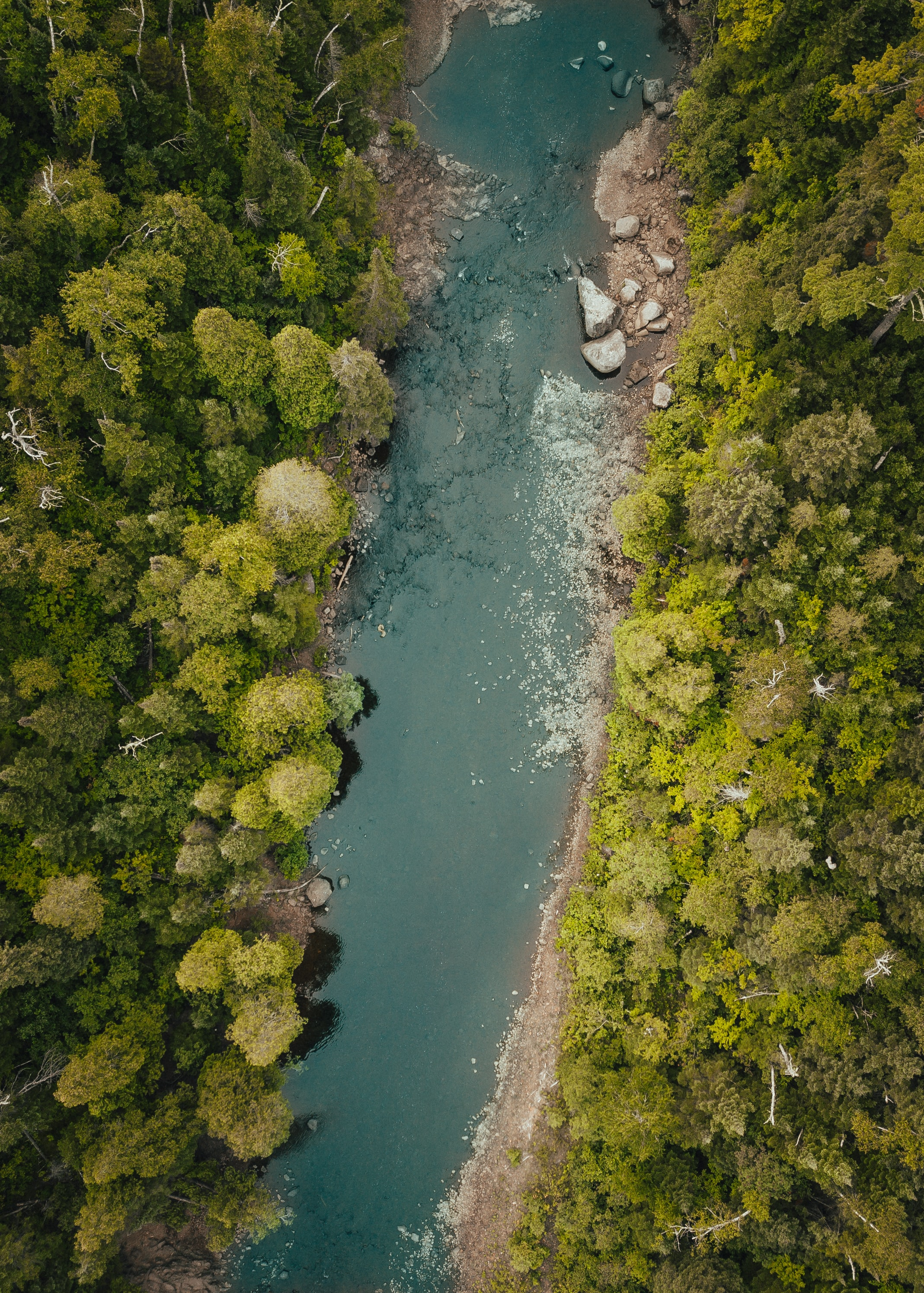 top view photo of river between pine trees