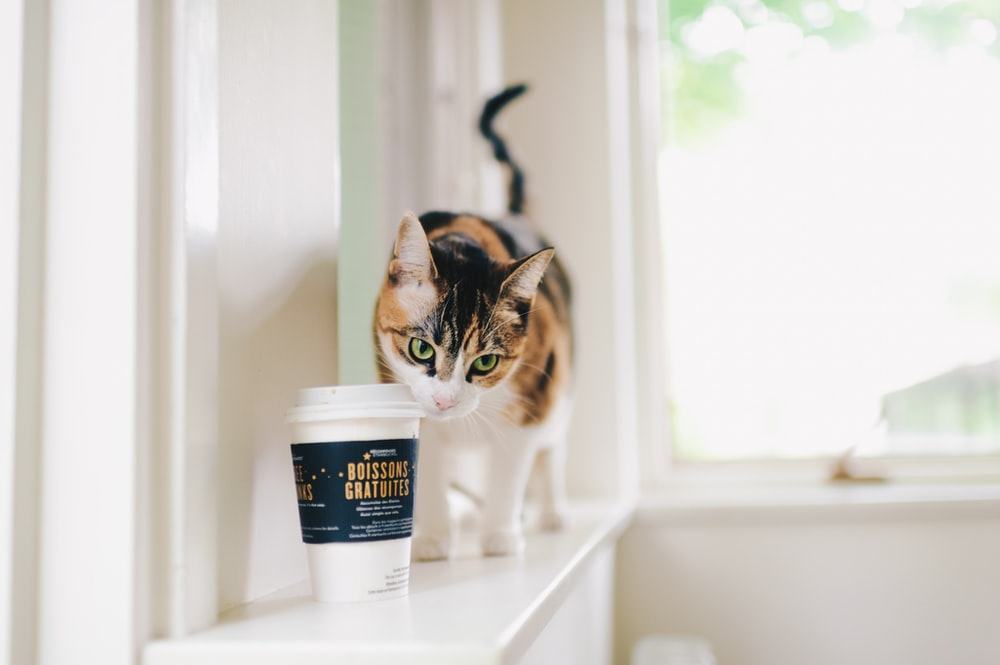 selective focus photography of calico cat and disposable cup indoors