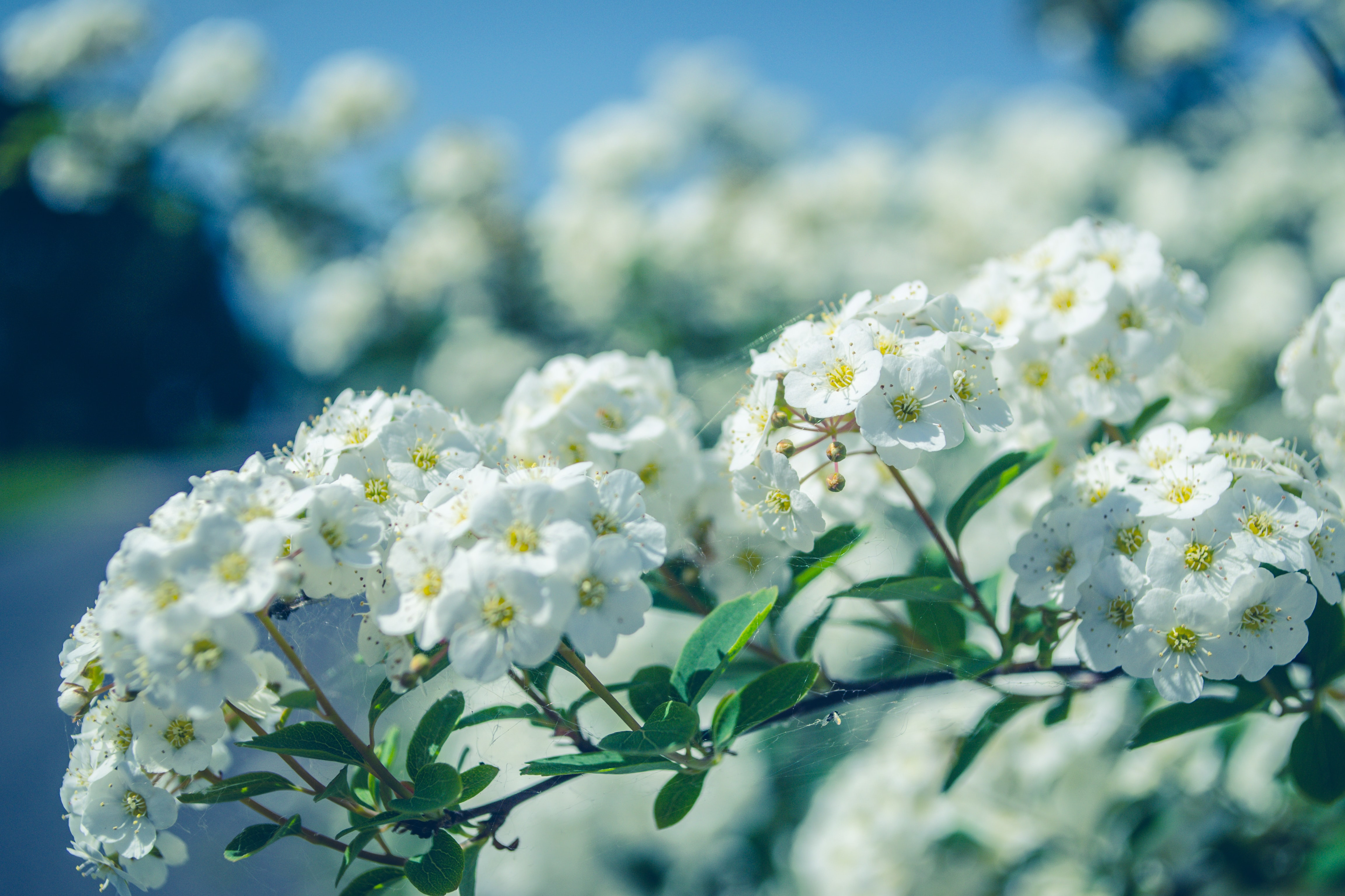 selective focus photo of white petaled flowering plant