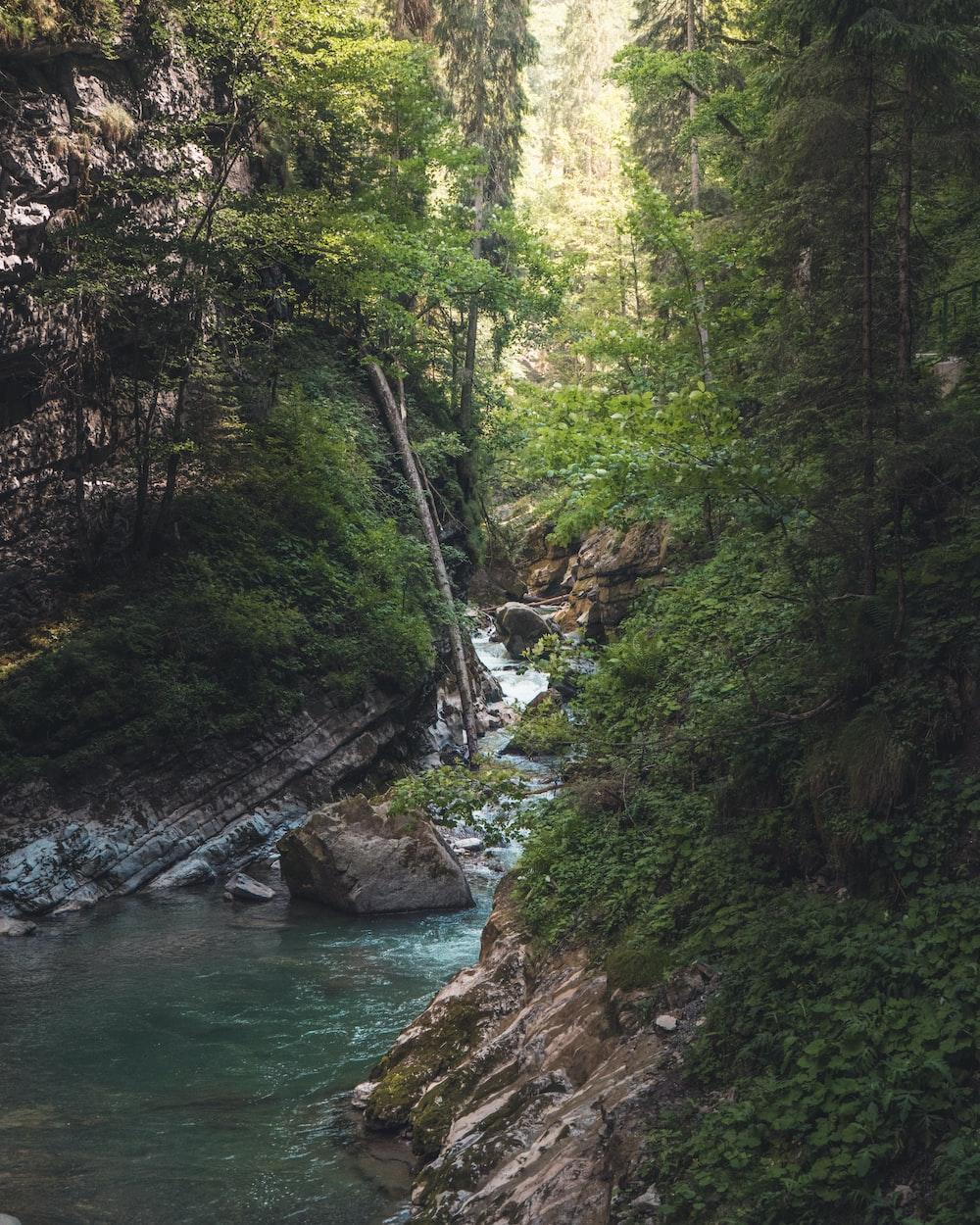 field of trees beside body of water
