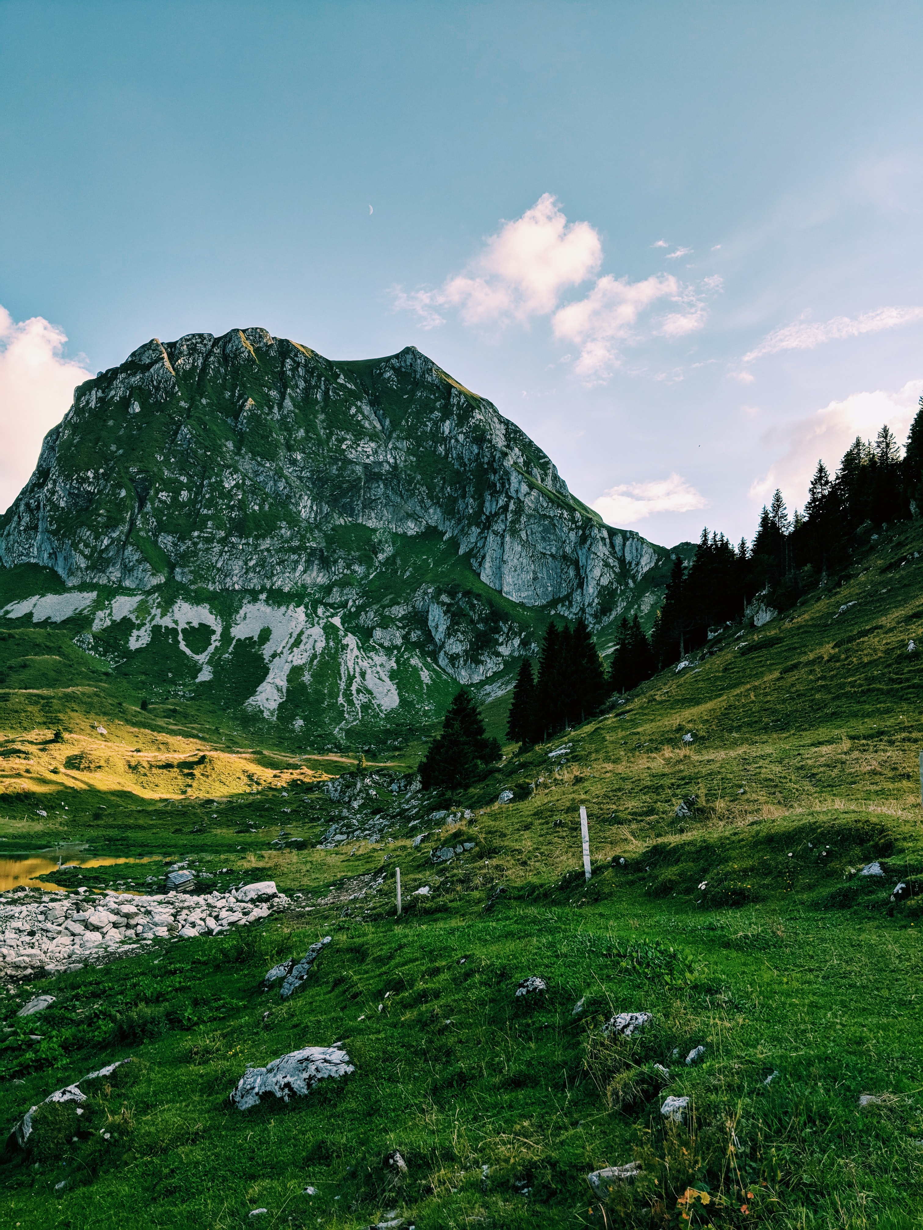 landscape photography of green forest mountain