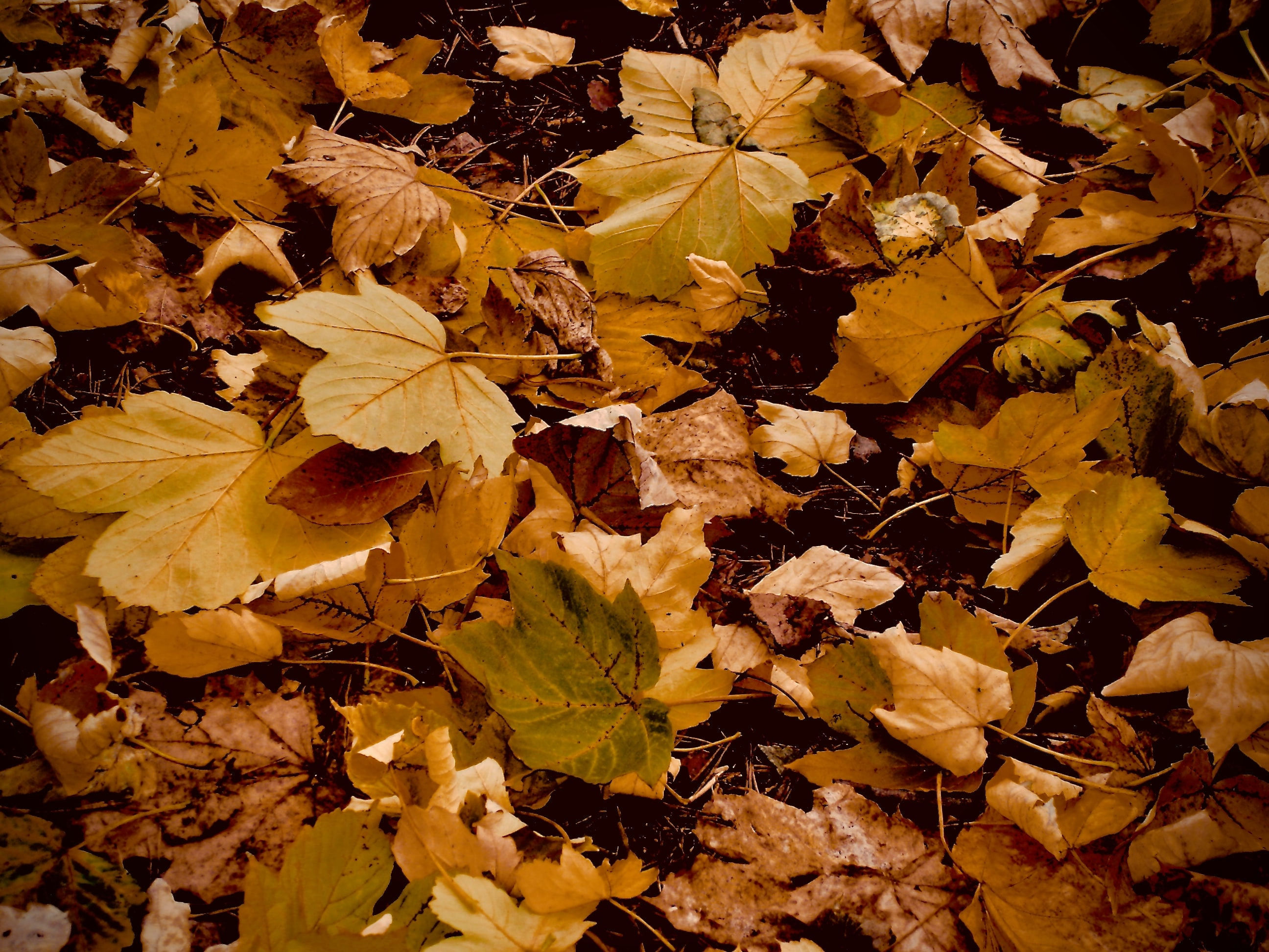 shallow focus photography of yellow leaves