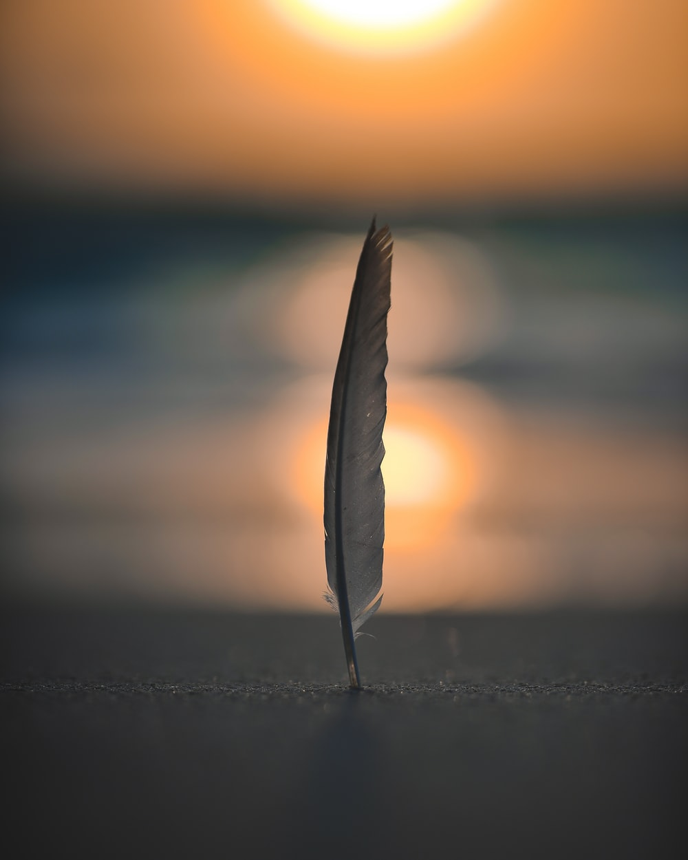 feather on sand in selective focus photography
