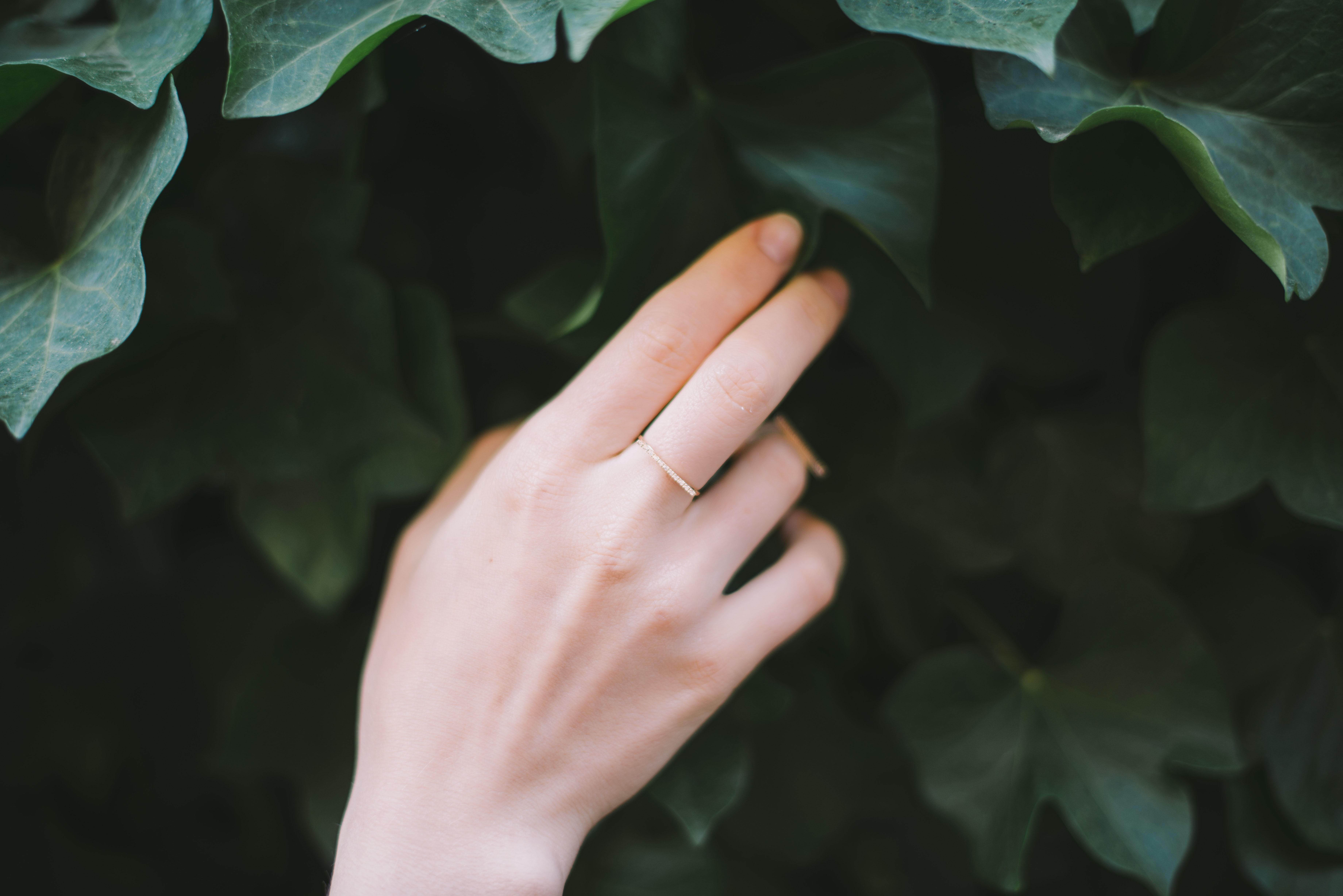 person touching green leafed plant
