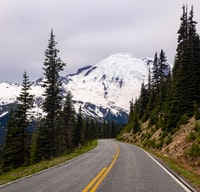 gray asphalt road near the green tree at daytime
