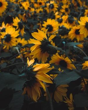 3961. Virágok