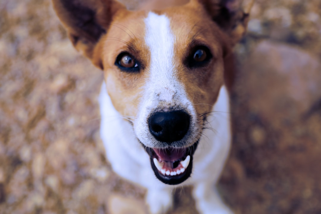 Your Pets Are Better Than You At Connecting Spiritually