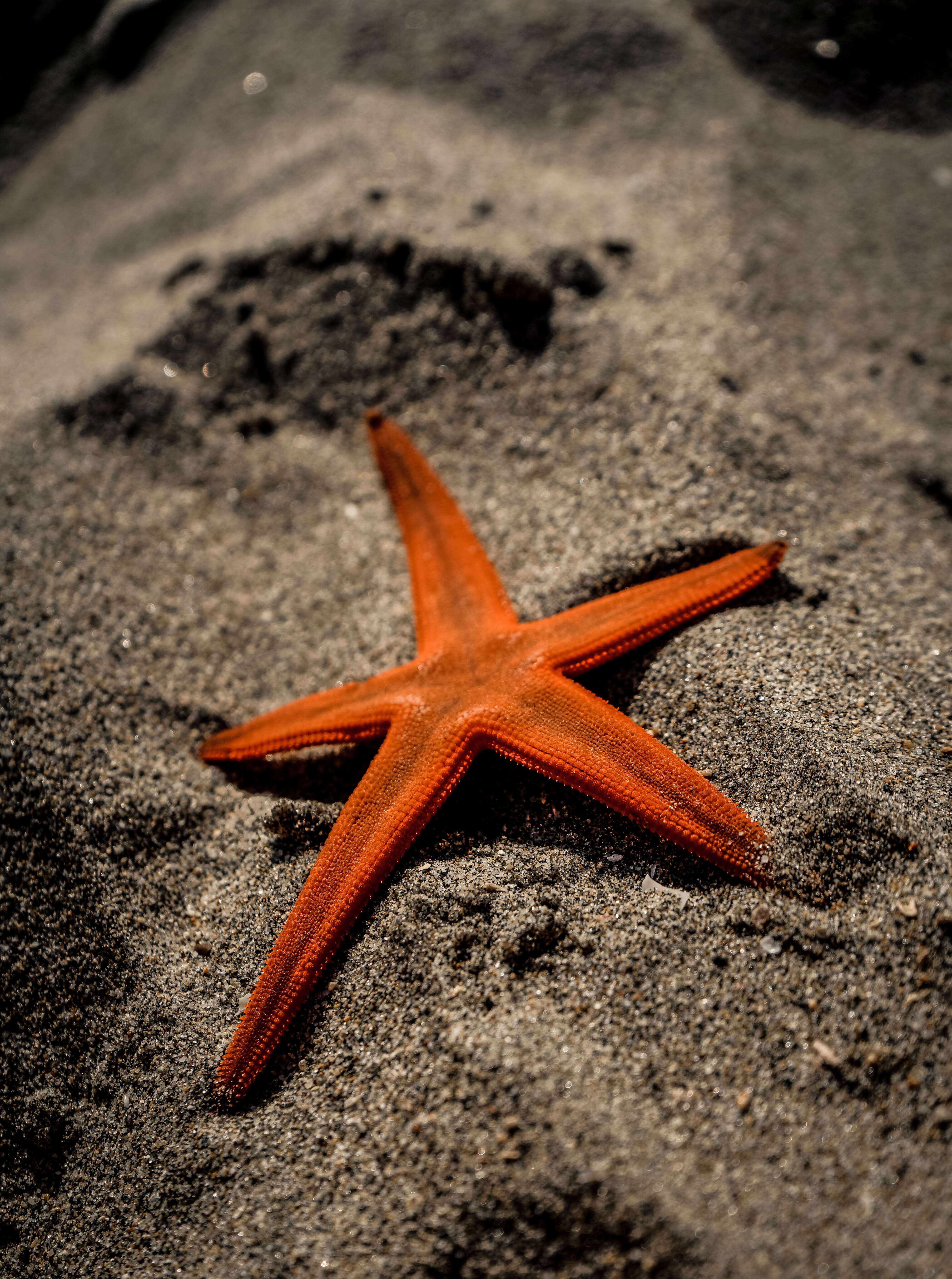 close-up photo of orange starfish on grey sand