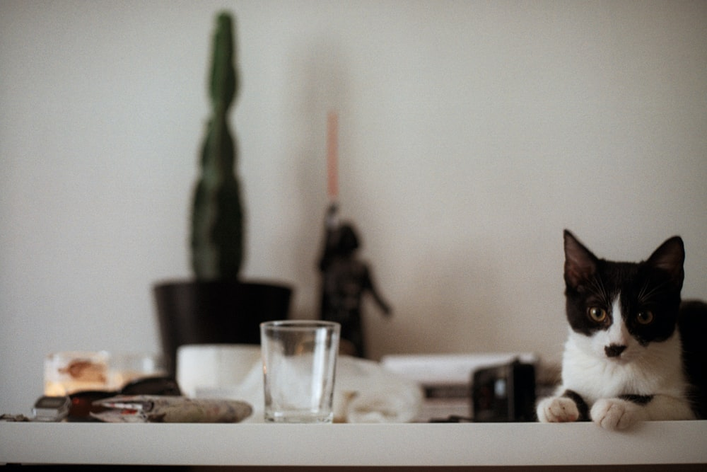 clear drinking glass and black and white cat on white table