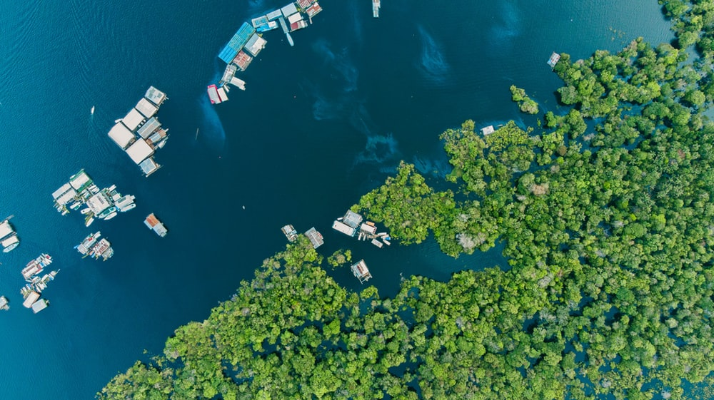 aerial view of houses on body of water