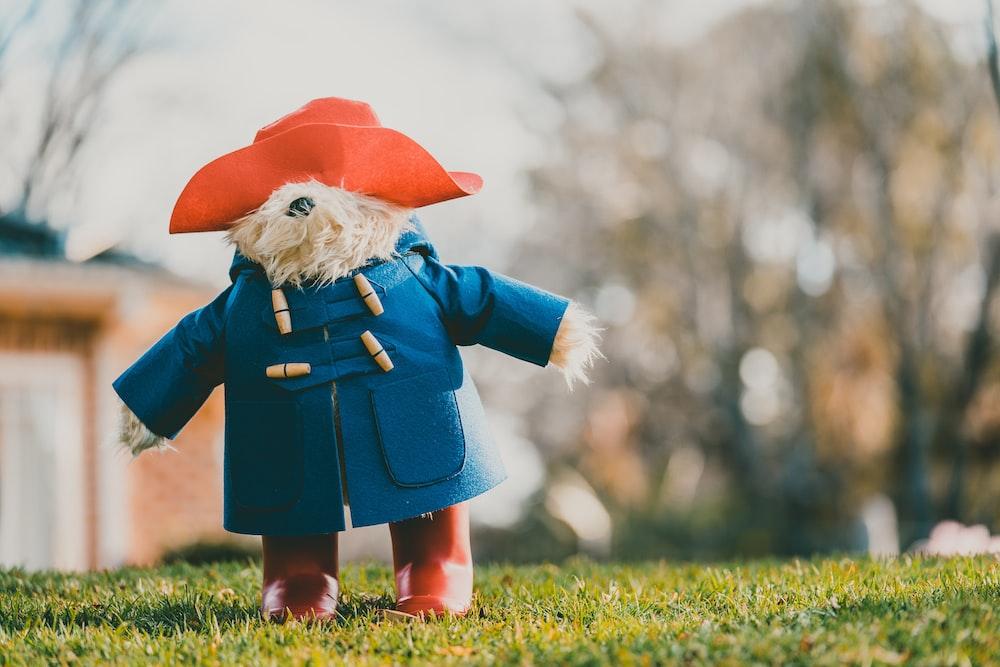 bear wearing blue coat