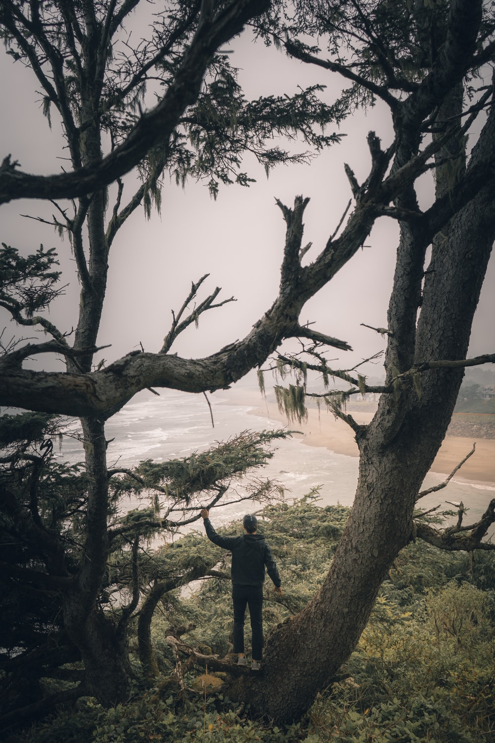 man standing on top of tree