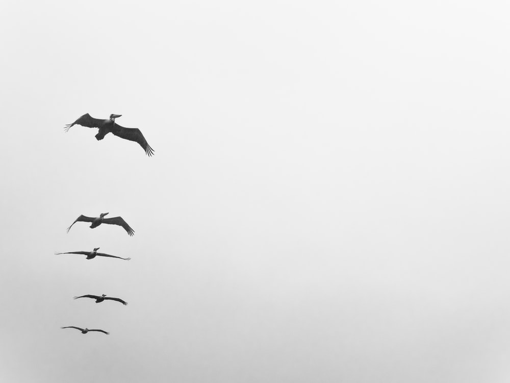 five birds flying on grayscale photo