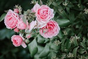 3954. Virágok