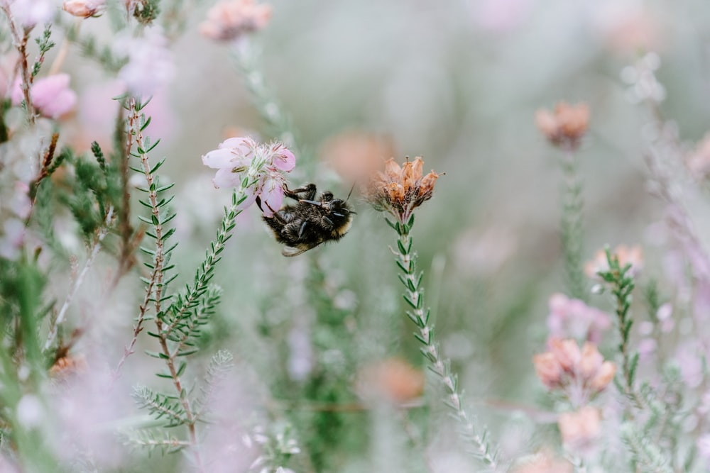 shallow focus photography of black and yellow bee lying on flower