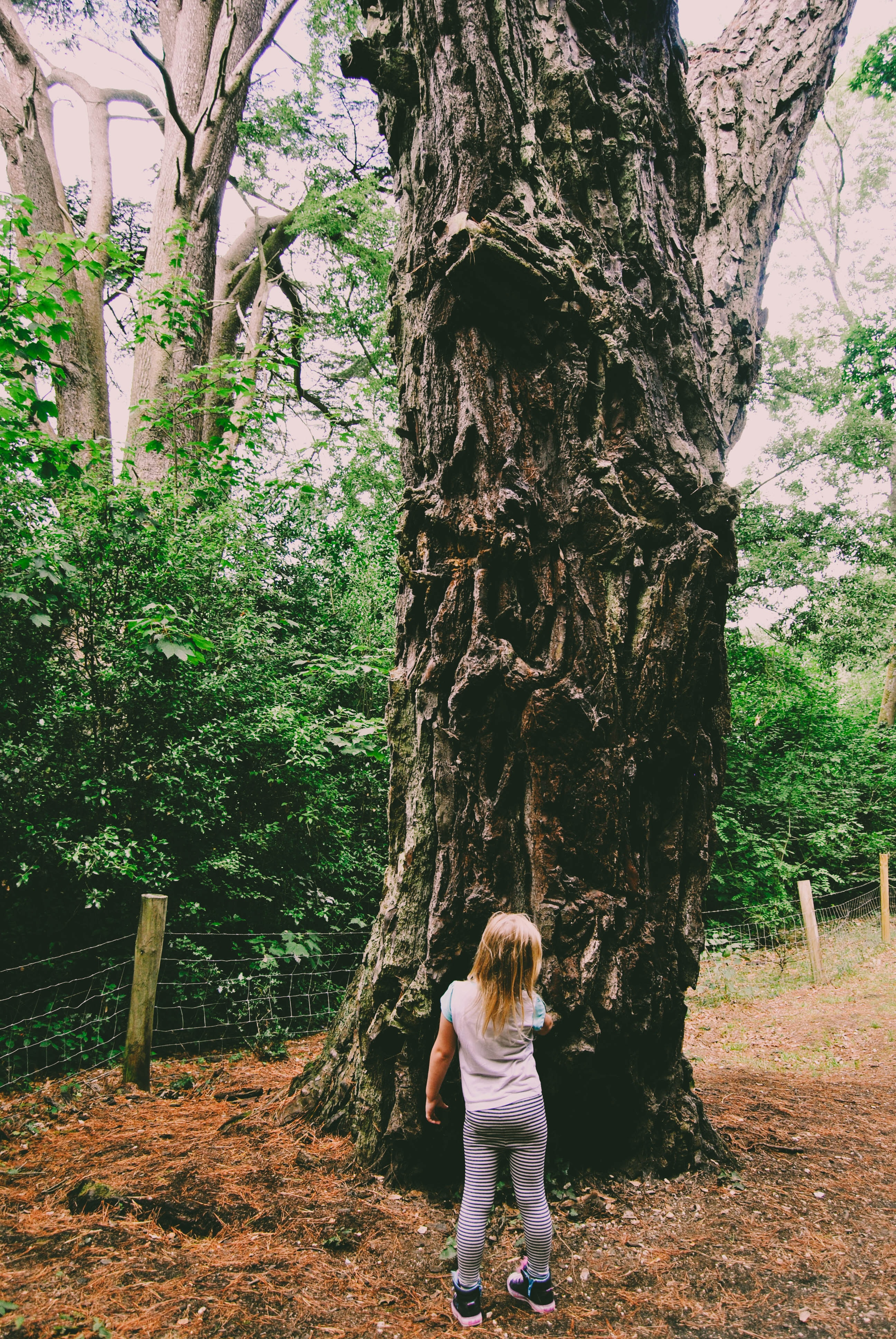 The oak tree by the road stories